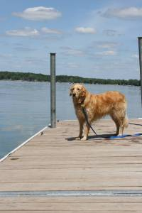 Dog days of summer, Kelly Lake