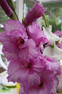 A bouquet of gladiolus.