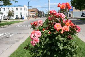 Kenyon's Boulevard of Roses cuts through Minnesota Highway 60.