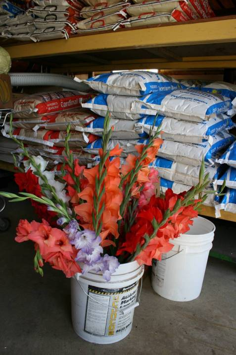 Old-fashioned gladiolus have been a mainstay at Twiehoff Gardens for decades.