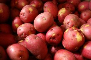 Fresh red potatoes are popular with shoppers.
