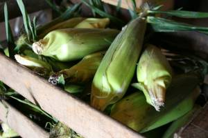 While sweet corn season is about over at Twiehoffs, it's a hot summer commodity.