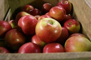 Trump's Orchard apples
