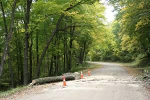 A fallen tree on Farmer Trail.