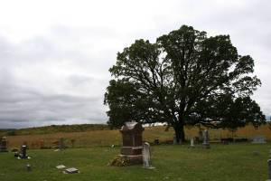 The majestic 350-year-old oak that anchors a corner of Valley Grove Church Cemetery.