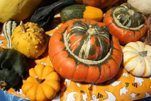 Squash, mini pumpkins and gourds at Twiehoff's Gardens.