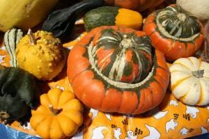 Squash, mini pumpkins and gourds at Twiehoff's Gardens.