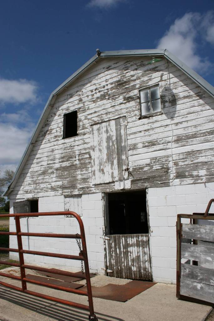 The early 1950s barn on the Redwood County dairy farm where I grew up today stands empty of animals.