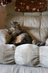 Sable the cat,2
