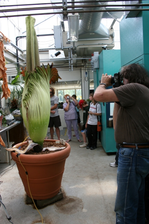 Visitors came with cameras in hand to photograph the rare blooming of Perry, which lasted until Sunday.