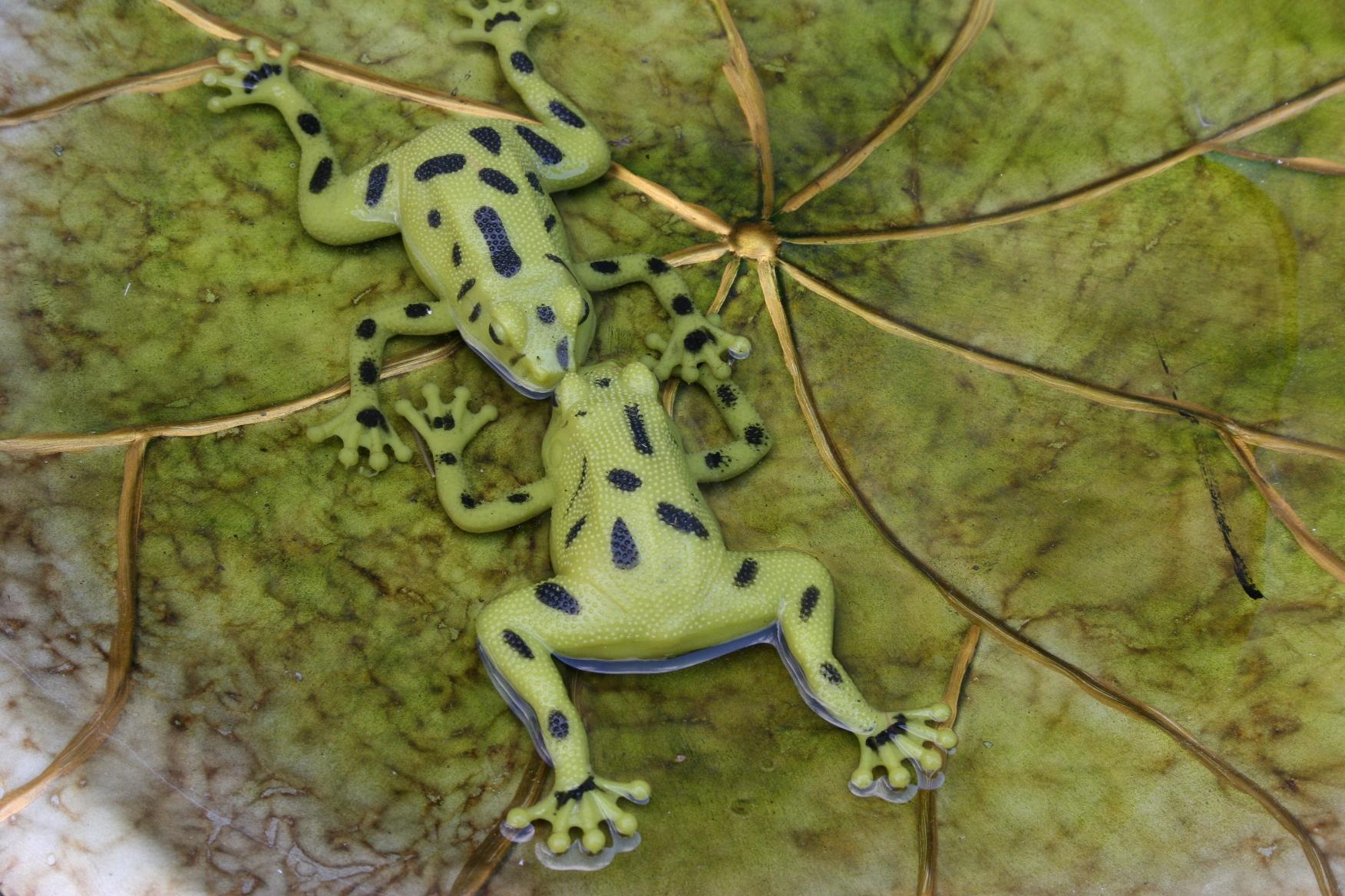 Frogs cast an enchanting spell in my sisters Minnesota garden
