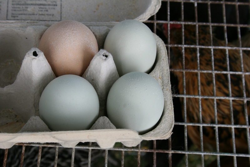 Fresh eggs and caged chickens attracted lots of interest.