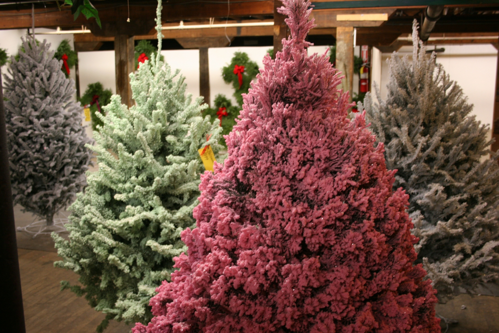 Shopping for a Christmas tree | Minnesota Prairie Roots