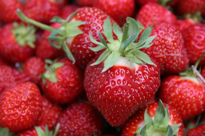 A shipped-in, store-bought strawberry can never match the taste of a fresh Minnesota berry, like those pictured here in this file photo of Straight River Farm berries.