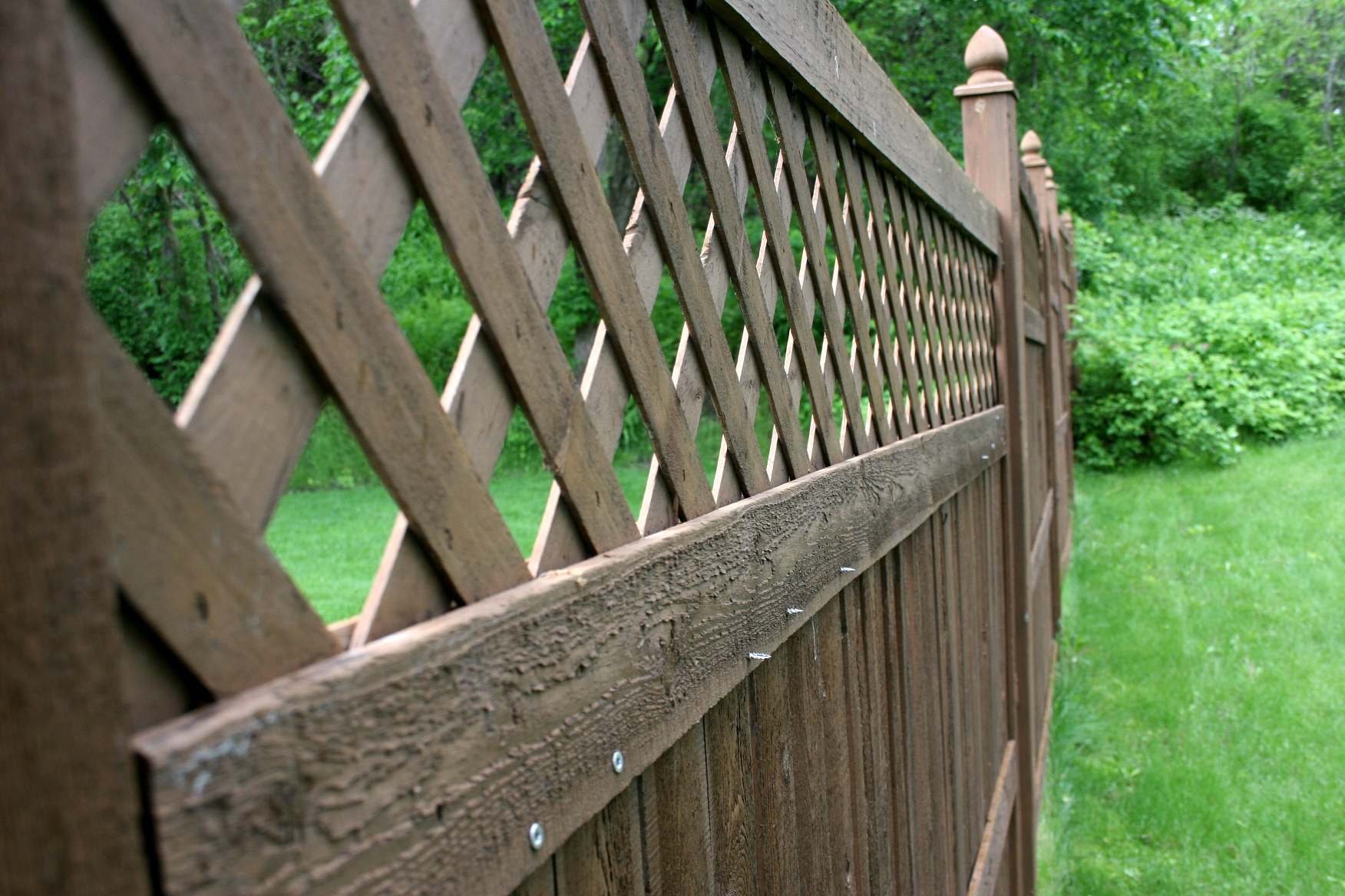 Marvelous photograph of Fence lattice with #4B8F3C color and 1752x1168 pixels