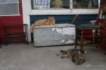 Hopefull Treasures, 2cats