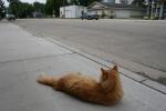 Hopefull Treasures, orange cat looking downstreet
