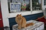 Hopefull Treasures, orangecat