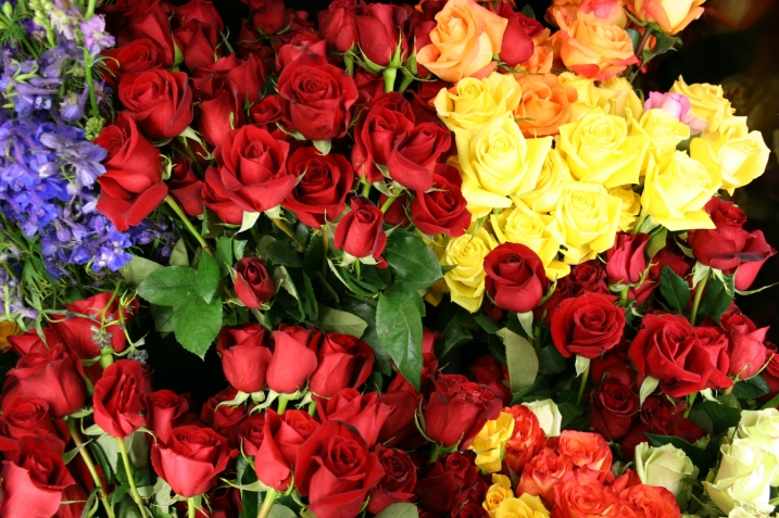 Roses pack coolers for Valentine's Day 2012 in this Minnesota Prairie Roots file photo from Waseca Floral.
