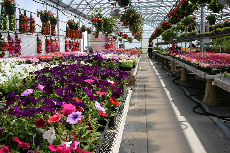 Tables packed with colorful flowers fill the Faribault Garden Center.