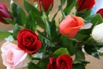 Roses – Copy