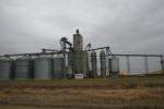 Drive, corn & elevators byBarnesville