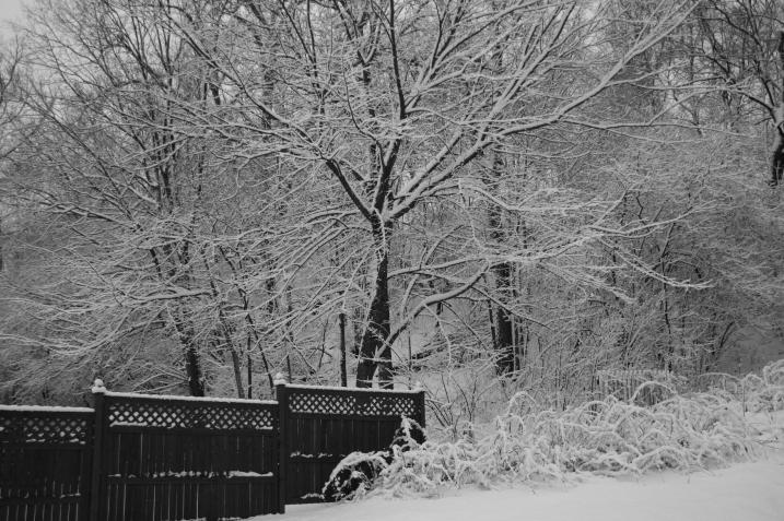 The winter wonderland view in my Faribault backyard around 4:30 p.m. today.