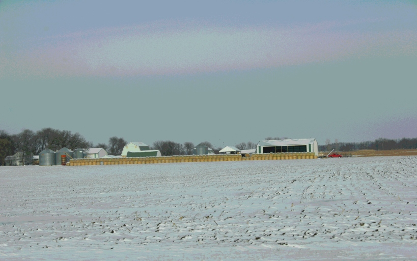 East of Courtland, rows of bales edge a farm site.