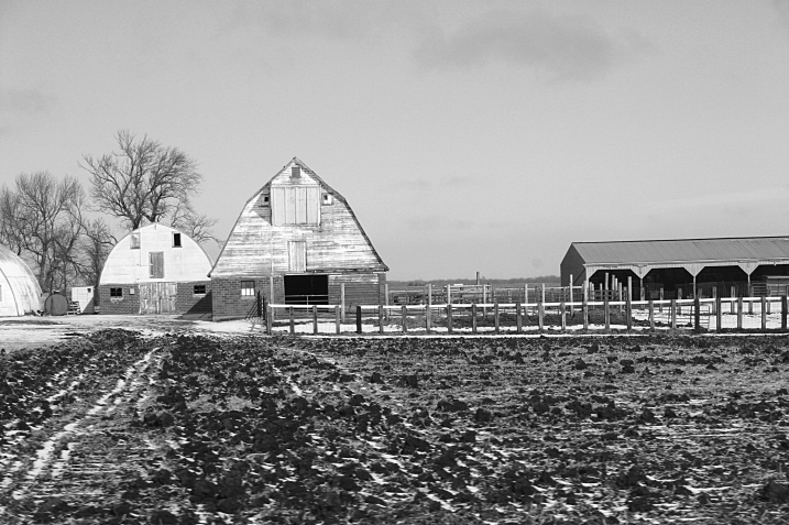 The day prior, en route to Vesta, I photographed this barn between New Ulm and Morgan.