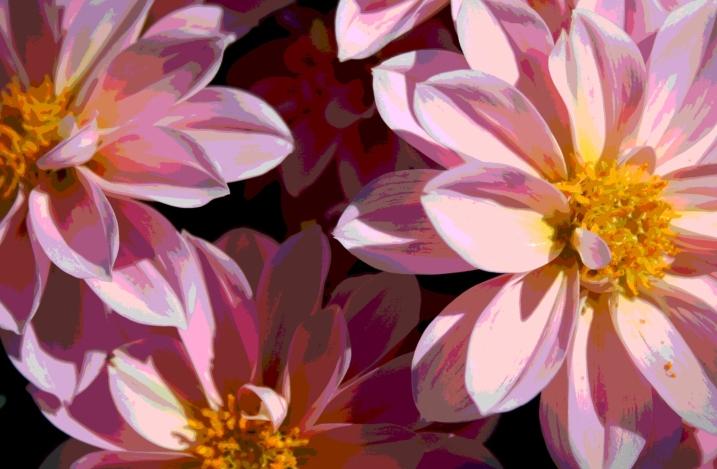 Blooms, pink