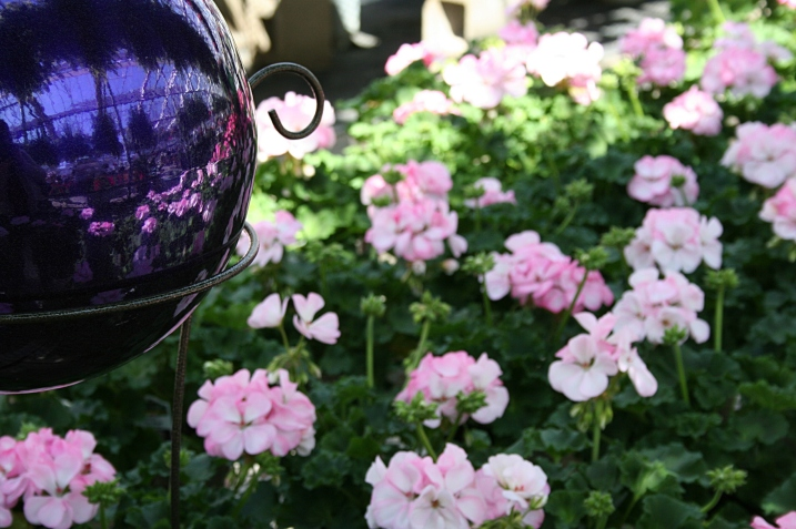 Greenhouse, gazing ball and geraniums
