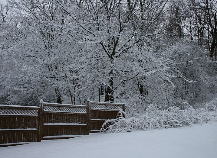 My backyard this morning with about four inches of new snow on the ground.