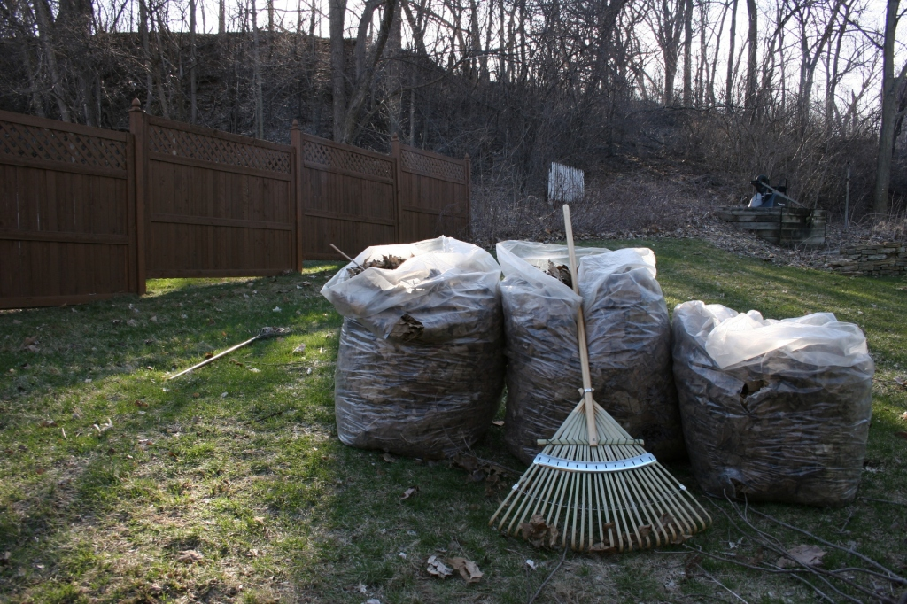 I raked these leaves from backyard flower beds. Look at that lawn and the hillside. No snow. Anywhere.