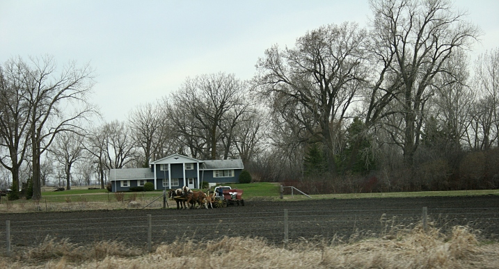 East of Moorhead, draft horses seed small grain.