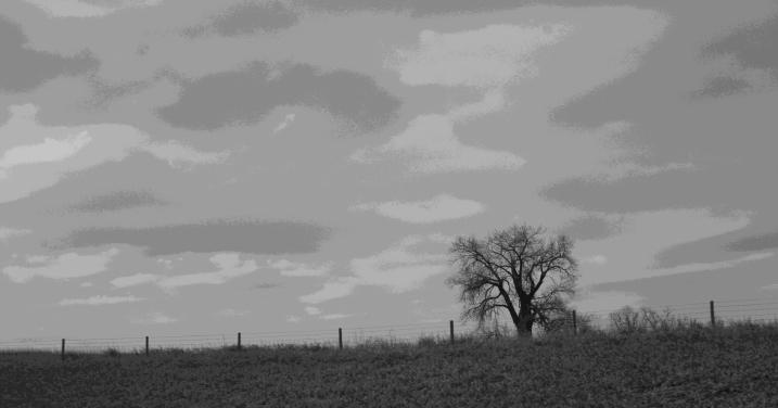 Rural scene, lone tree