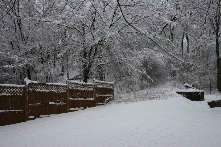 Our snowy backyard.