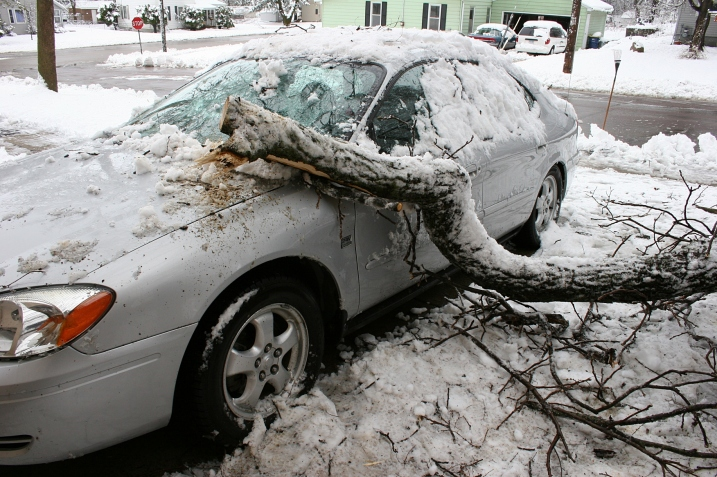A limb broke off my neighbor's tree around 6 a.m., striking her house and then smashing onto her car, breaking the windshield. In this photo my husband had already sawed a portion of the limb off. We then pulled this remaining limb from her car so she could move it, before another limb fell.