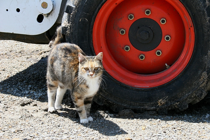 A farm cat that was just a wee skittish with about 600 strangers visiting the farm.
