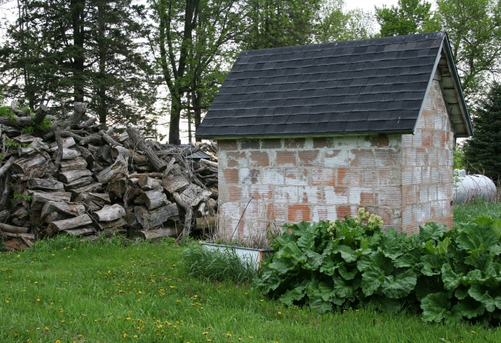 Rhubarb grows by the old smokehouse, which now houses garden tools.