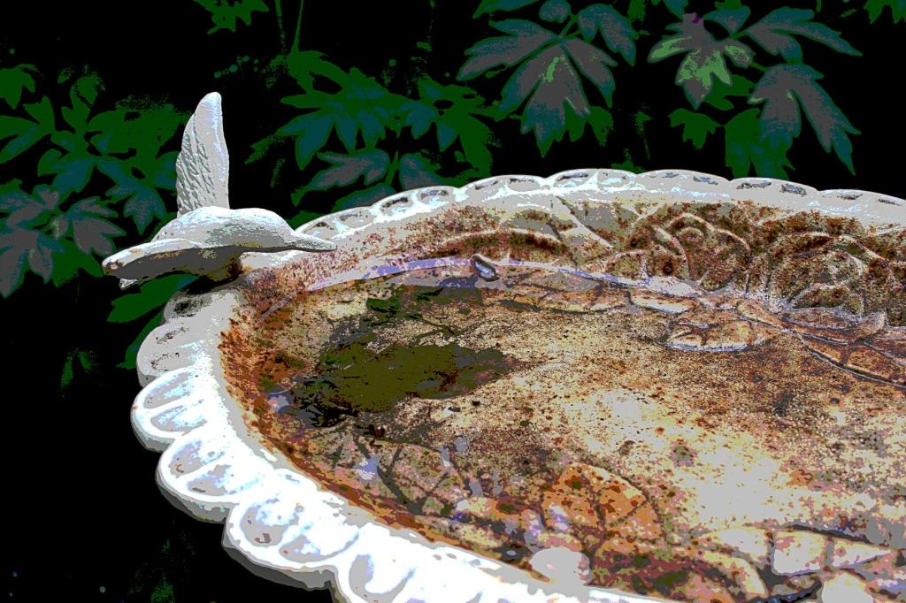 Backyard bird bath.