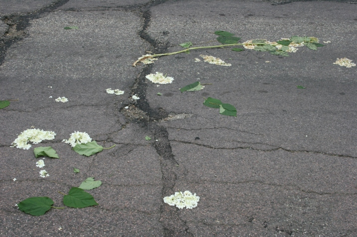 ...and scattered onto the side street, where the flowers were run over by vehicles.