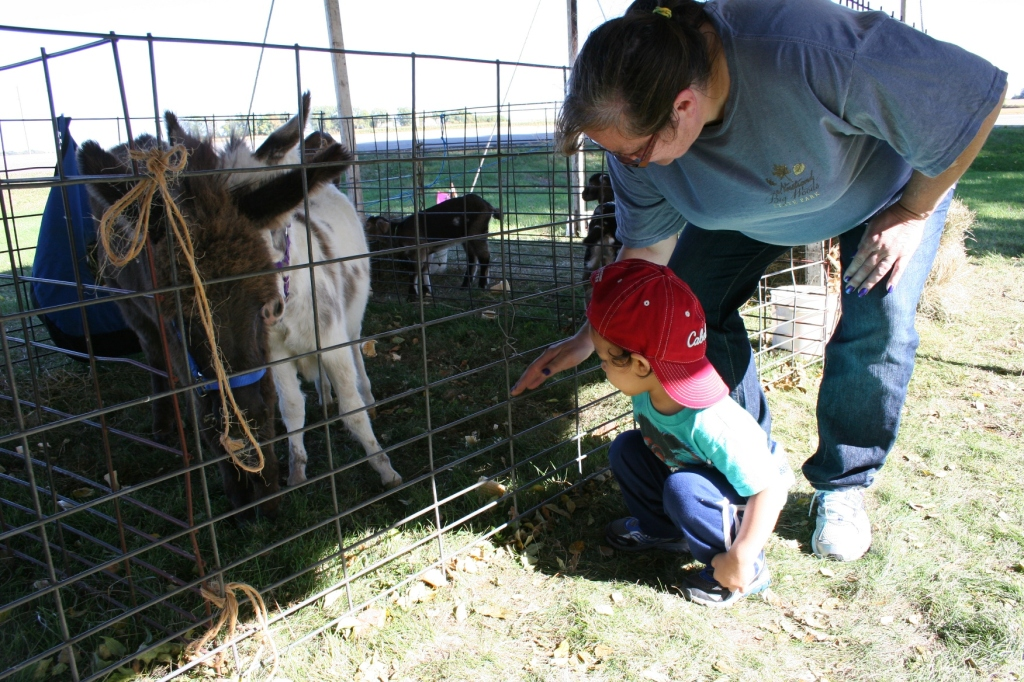 And this little guy loved the miniature donkeys.