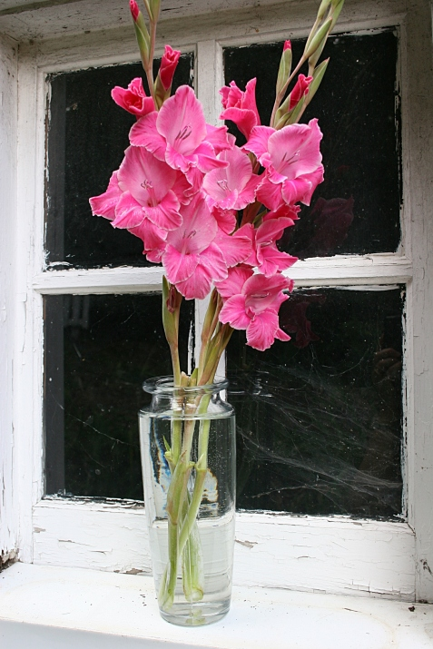 The three stems of gladiolus I snipped in Steve's garden.