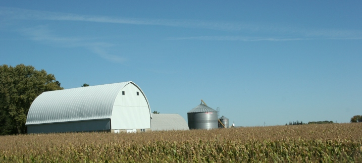 Barns, like this one, rise above the soon-to-be-harvested corn fields.