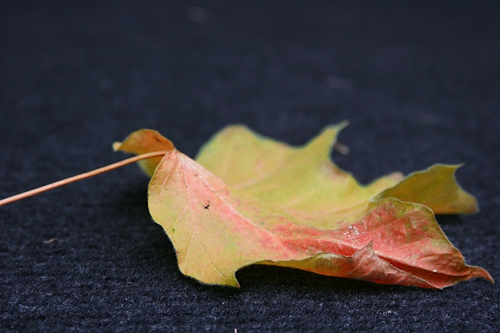 With a little photo editing, I transformed that leaf on my back steps in to hues we can expect to see in a few weeks, maybe less. Have you noticed the tinge of yellow and orange in the trees here in Minnesota?