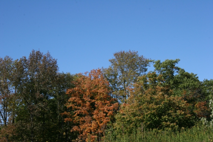 A tree line in the park shows leaves beginning to change color.