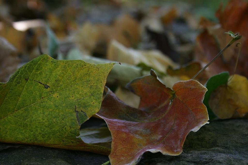 Leaves upon that limestone path.