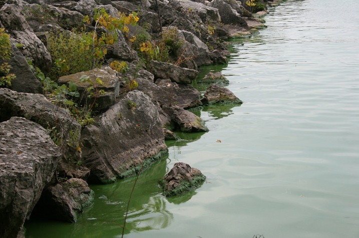 A close-up of the lake. No photo editing of the blue-green color.