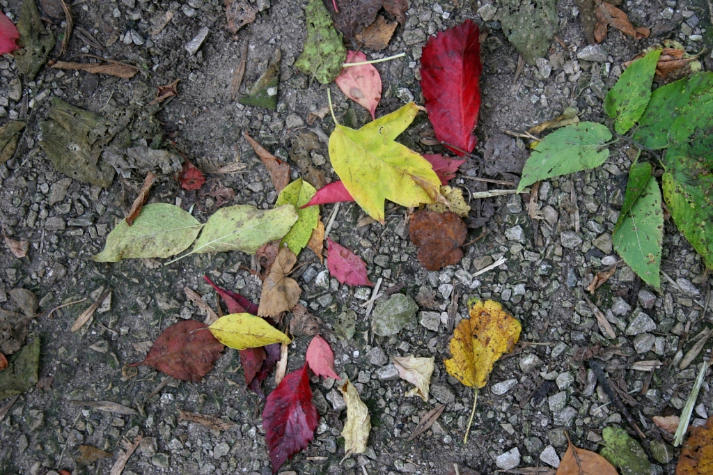 A colorful collage of leaves on a trail near the kiln ruins.