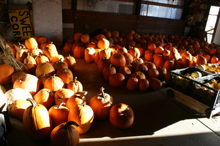 Late afternoon sunshine slants through the open poleshed door, spotlighting pumpkins for sale at Twiehoff Gardens.